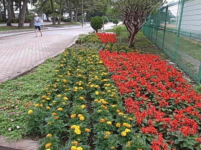 補助陸上競技場花壇
